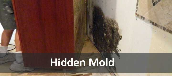 Cabinet pulled away from the wall to reveal black mold