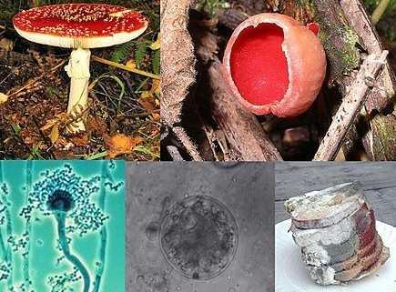 Composite of five different mold species