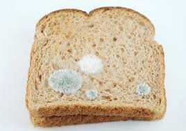 Photo of wheat bread with spots of mold