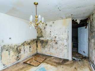 Photo of an extremely moldy vacant dining room with mold on walls, ceiling and floor