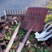 Wheelbarrow with tools and moldy leaves