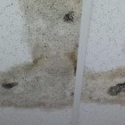 Mold on ceiling of military housing