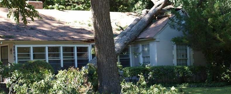 House with fallen tree from hurricane damage