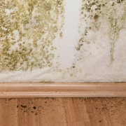 Black Mold on Wall and Floor