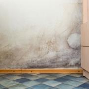 Black Mold on Bathroom Walls