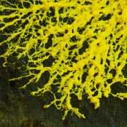 Photo of Slime Mold on Wood