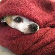 Self-sooth with a blanket and your pet